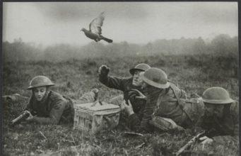 1940 год. Английские солдаты выпускают голубя-курьера